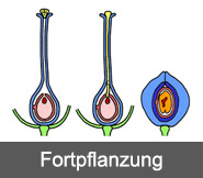 Fortpflanzung